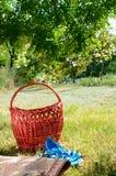 koszykowa trawa Zdjęcia Stock