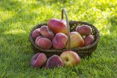 koszykowe świeże owoce obraz stock