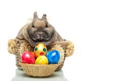 koszykowego królika śliczny Easter jajek target2054_1_ zdjęcia stock