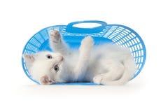 koszykowej błękitny figlarki plastikowy bawić się Fotografia Stock
