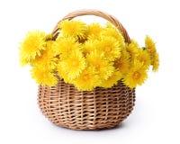 koszykowi dandelions Obraz Royalty Free