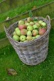 Koszykowi jabłka Zdjęcie Stock