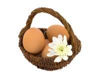 koszykowi jajka obraz stock
