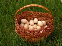 koszykowi jajka Fotografia Stock