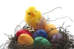 koszykowi kurczątek Easter jajka Obrazy Royalty Free