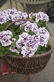 koszykowi kwiaty zdjęcie royalty free