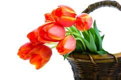 koszykowi tulipany Obrazy Royalty Free