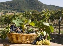 koszykowi winogrona Fotografia Royalty Free