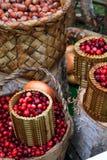 koszykowy cranberry fotografia royalty free