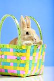 koszykowy królik Easter Obraz Stock
