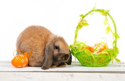 koszykowy królik Easter Obraz Royalty Free