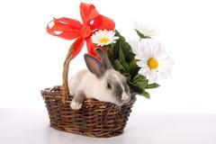 koszykowy królika wicker Zdjęcie Stock