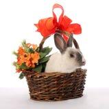 koszykowy królika wicker Zdjęcie Royalty Free