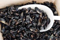 koszykowy mussel Fotografia Royalty Free