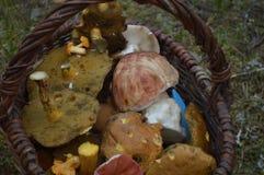koszykowy pełny obraz odizolować grzyby Zdjęcie Royalty Free