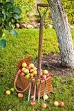 koszykowy pitchfork Zdjęcie Stock