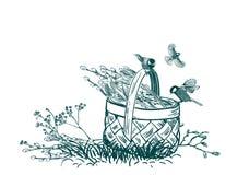 Koszykowy tulipanu kwiatu wektor graweruje kartę odizolowywającą royalty ilustracja