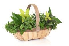koszykowy ziele Zdjęcie Stock