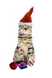 kotów boże narodzenia Fotografia Royalty Free