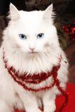 kotów boże narodzenia Fotografia Stock