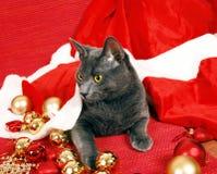 kotów boże narodzenia Obraz Royalty Free