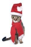 kotów boże narodzenia Zdjęcia Royalty Free
