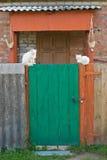 kotów drzwi zieleni biel Obraz Stock