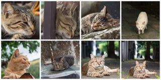 kotów inkasowy ilustraci wektor Zdjęcia Royalty Free