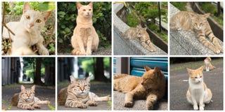 kotów inkasowy ilustraci wektor Obrazy Royalty Free
