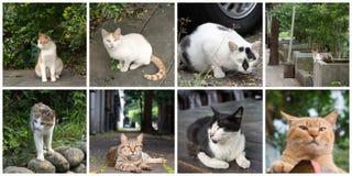 kotów inkasowy ilustraci wektor Obrazy Stock