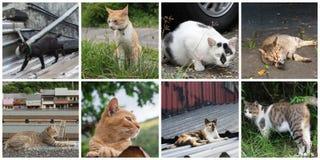 kotów inkasowy ilustraci wektor Obraz Stock