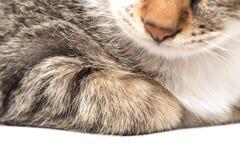 Kotów kłamstwa Zdjęcia Royalty Free