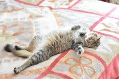 Kotów kłamstwa Zdjęcie Stock