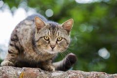 12 kotów kuzia o portret senior y Obraz Royalty Free