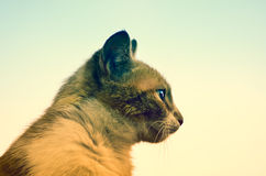 12 kotów kuzia o portret senior y Obraz Stock