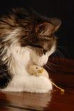 3 kotów mysz Fotografia Royalty Free