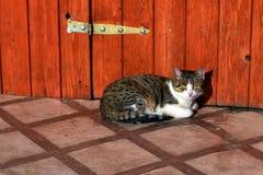 Kotów naczynia Fotografia Royalty Free