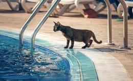 Kotów napojów woda Zdjęcie Stock