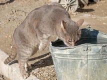 Kotów napojów woda Fotografia Royalty Free