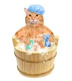Kotów obmycia Zdjęcia Royalty Free