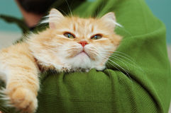 kotów oczu zieleni ręk mężczyzna czerwień Obraz Stock