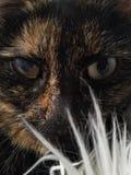 Kotów oczy Obrazy Royalty Free