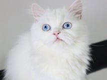 Kotów oczy Fotografia Royalty Free