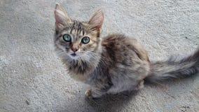 Kotów oczy Fotografia Stock