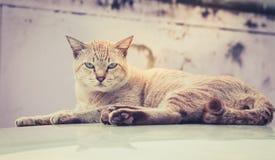 Kotów oczy gapi się srogo Zdjęcia Stock