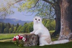 Kotów polowania na krawędzi Obrazy Stock