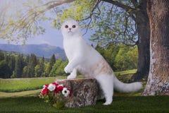 Kotów polowania na krawędzi Zdjęcie Royalty Free