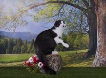 Kotów polowania na krawędzi Obraz Stock