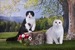 Kotów polowania na krawędzi Zdjęcie Stock