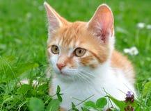 kotów potomstwa Obraz Stock